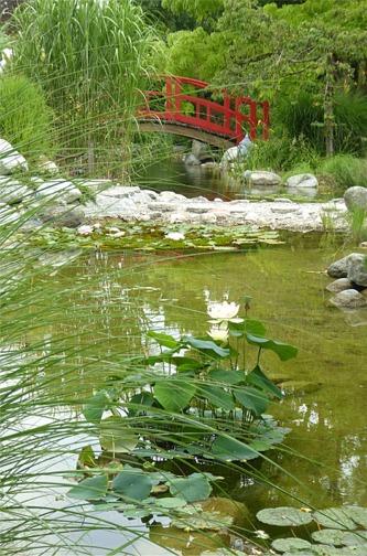 Homepage Lotusgarten Brückeklein